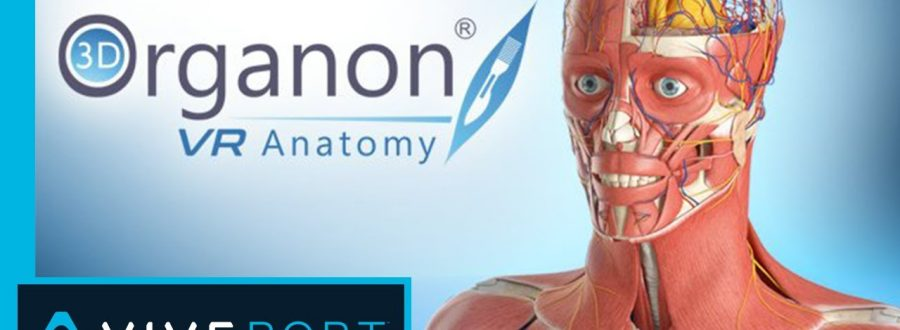 3D Organon's VR Anatomy: Thoughts on Design and Theory
